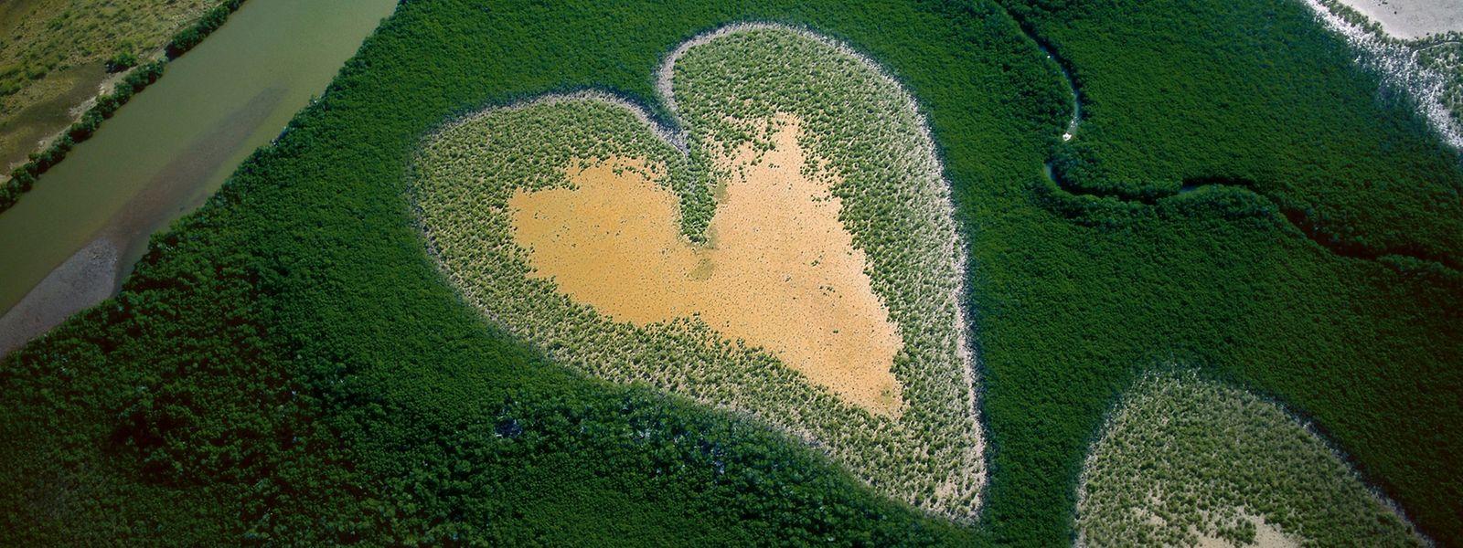Herz von Voh, Neukaledonien, Frankreich: Mangroven besitzen aus dem Wasser ragende Wurzeln und wachsen auf tropischen Schlickböden, die dem Wechsel der Gezeiten ausgesetzt sind. Die empfindlichen Ökosysteme schwinden durch Raubbau, die Ausbreitung von Landwirtschaft und menschliche Siedlungen.