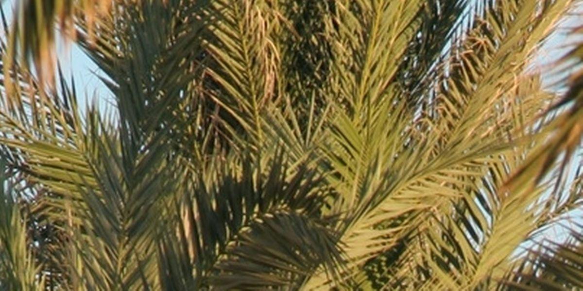 Für Jesus war Palmsonntag der Anfang vom irdischen Ende, aber das irdische Ende war eben nicht das letzte Wort.