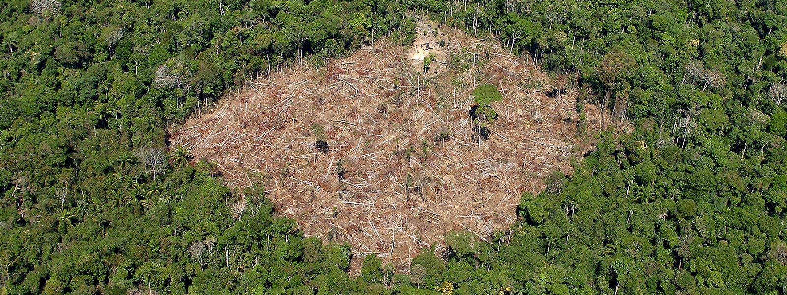 Vor allem der Regenwald ist von den Plänen der neuen Regierung unter Jair Bolsonaro bedroht: Bolsonaro will eine asphaltierte Straße mitten hindurch bauen lassen.