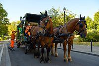 """07.08.2020, Belgien, Brüssel: Antonov Severin (l), Mitarbeiter des Sauberkeitsdienstes, lädt Müllsäcke in den Pferdewagen des Sauberkeitsdienstes im Brüsseler Stadtteil Schaerbeek. Seit 2011 kommt die Müllabfuhr an sechs Tagen in der Woche nicht nur mit den herkömmlichen Lastwagen, sondern auch per Pferdegespann. Rund 200 öffentliche Mülleimer am Tag werden dann so geleert. (zu dpa """"Müllwagen mit Hufen - Vierbeiner auf Brüssels Straßen im Einsatz"""") Foto: Sven Braun/dpa +++ dpa-Bildfunk +++"""