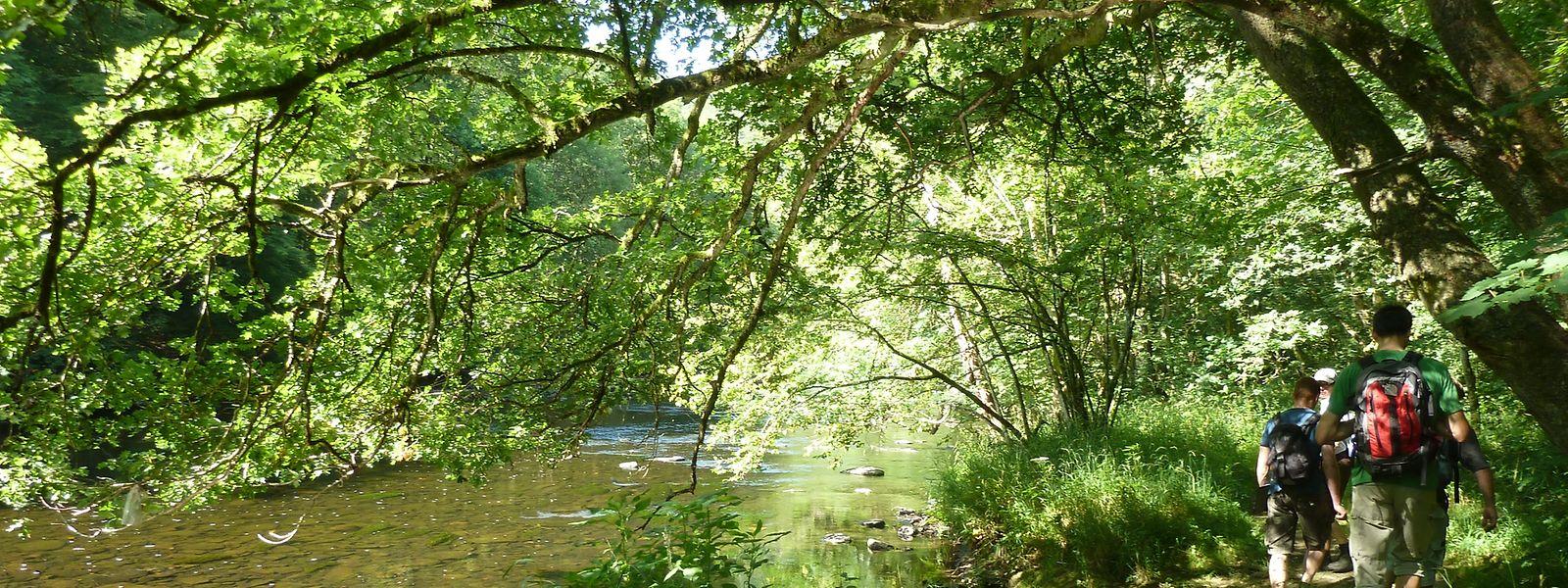 Quatre parcs naturels des provinces belges de Liège et de Luxembourg viennent de s'allier à l'Office du Tourisme des Ardennes Luxembourgeoises (ORTAL).