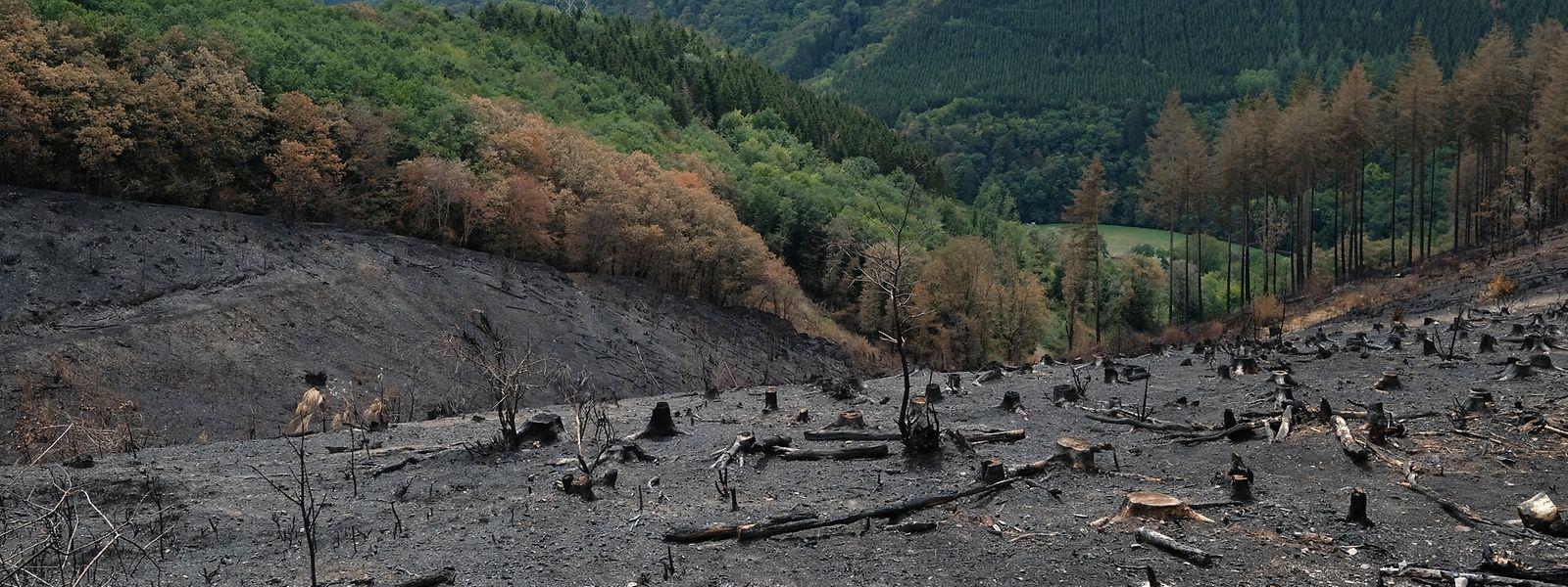Bis sich Wald und Flur von den Flammen erholt haben, wird noch viel Zeit vergehen. Derzeit gleichen die rund zehn Hektar bei Schlindermanderscheid einer Mondlandschaft.