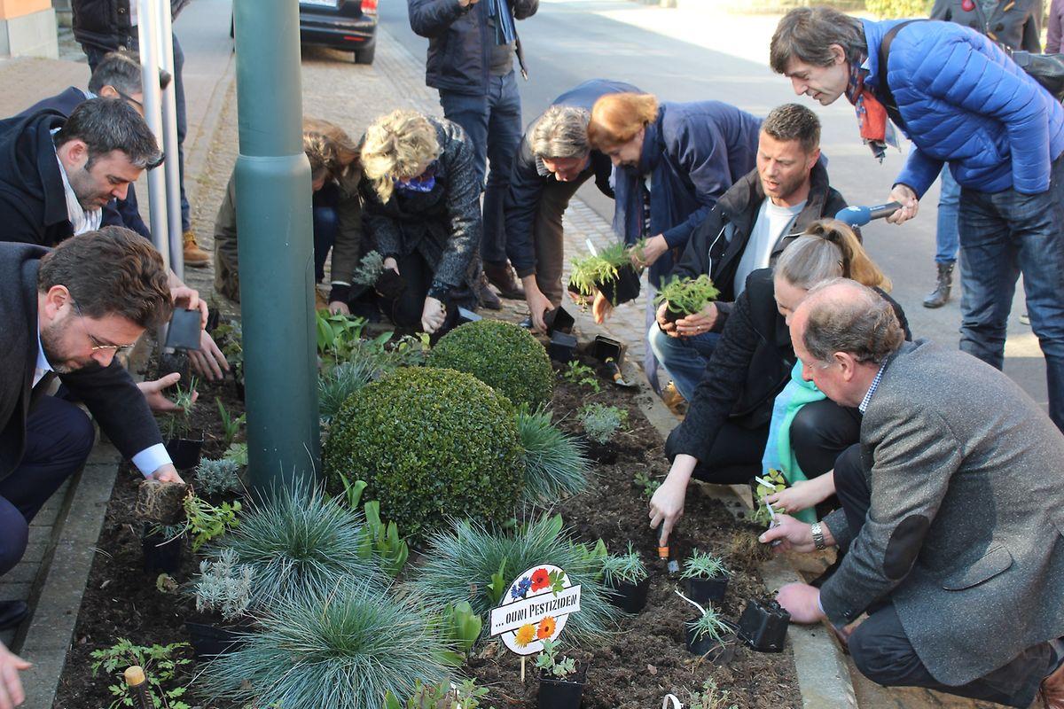 """Eine Vorbildrolle: Die Pflanzung der ersten, im Rahmen des Projekts produzierten, pestizidfreien Blumen und Stauden vor dem Betzdorfer Rathaus eröffnete die neue Kampagne """"Ouni Pestiziden""""."""