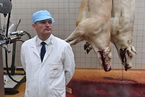 Chairman of the parliamentary commission investigating the slaughter conditions for the animals MP Olivier Falorni, looks on as he visits a slaughterhouse in Surgeres, western France, June 20, 2016. The emergence of a new secretly recorded video showing abuse of livestock at a French slaughterhouse prompted the agriculture minister on March 29, 2016 to order nationwide inspections of the facilities. / AFP PHOTO / XAVIER LEOTY