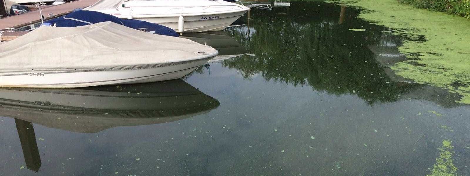 Attention, ces algues sont toxiques pour les humains et les animaux