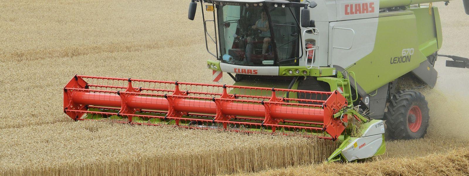Die Bauern sind mit ihren Mähdreschern zurzeit im Dauereinsatz. Die Witterung ist für die Ernte ideal.