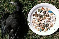 toter vogel plastik