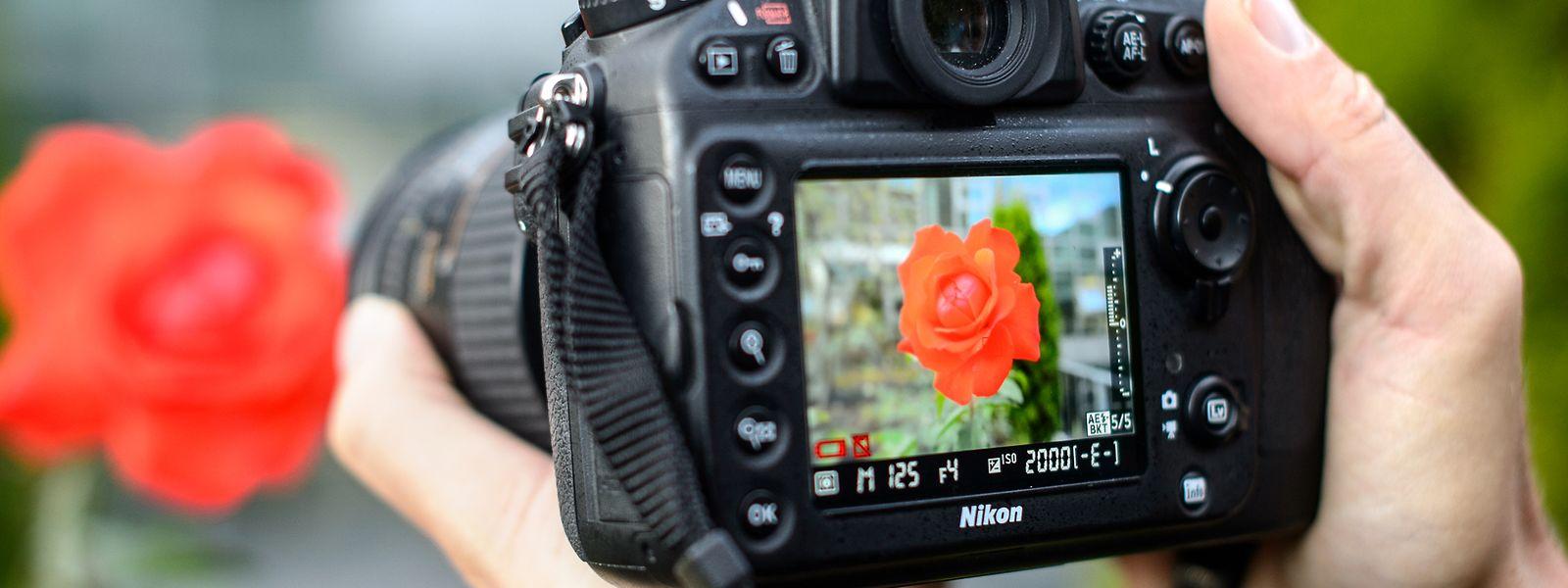 Der optische Sucher: Dessen natürliche Darstellung des Bildmotivs ist vielen Spiegelreflex-Fotografen enorm wichtig.
