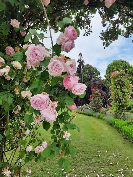 Rose garden in Mamer