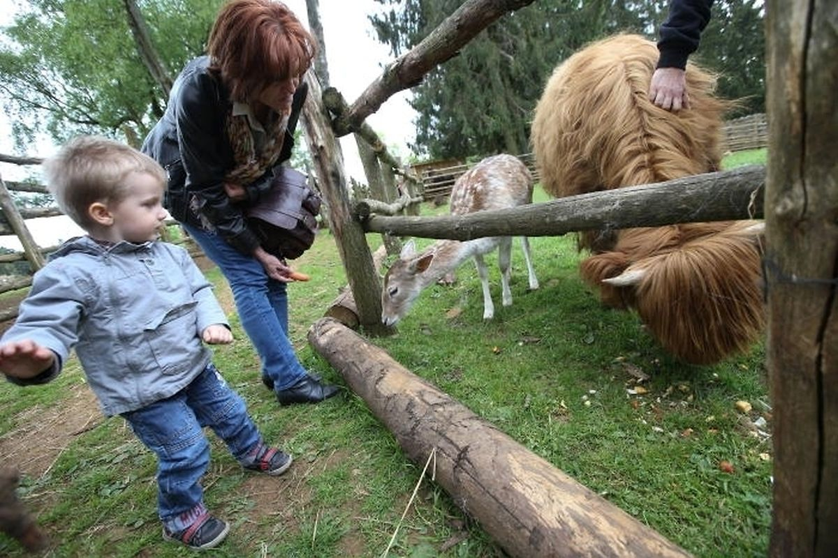 Escher Animal Park is free and makes a nice trip for kids to feed animals including highland cattle.
