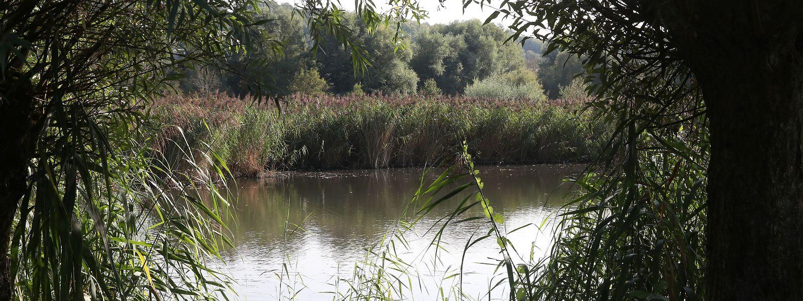 Der Schifflinger Brill ist ein von Menschen geschaffenes Paradies für viele Tier- und Pflanzenarten.