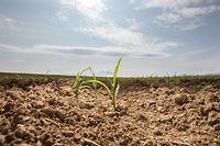 Lok, Bodentrockenheit , Dürre , Regenmangel , Landwirtschaft ,Foto: Guy Jallay/Luxemburger Wort
