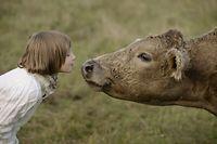 Mensch und Tier, Kuh, Rind
