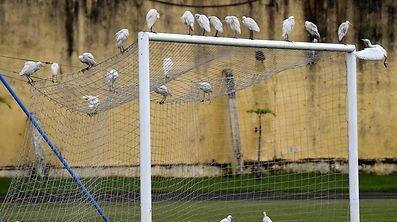 Der Fußball begeistert nicht jeden.