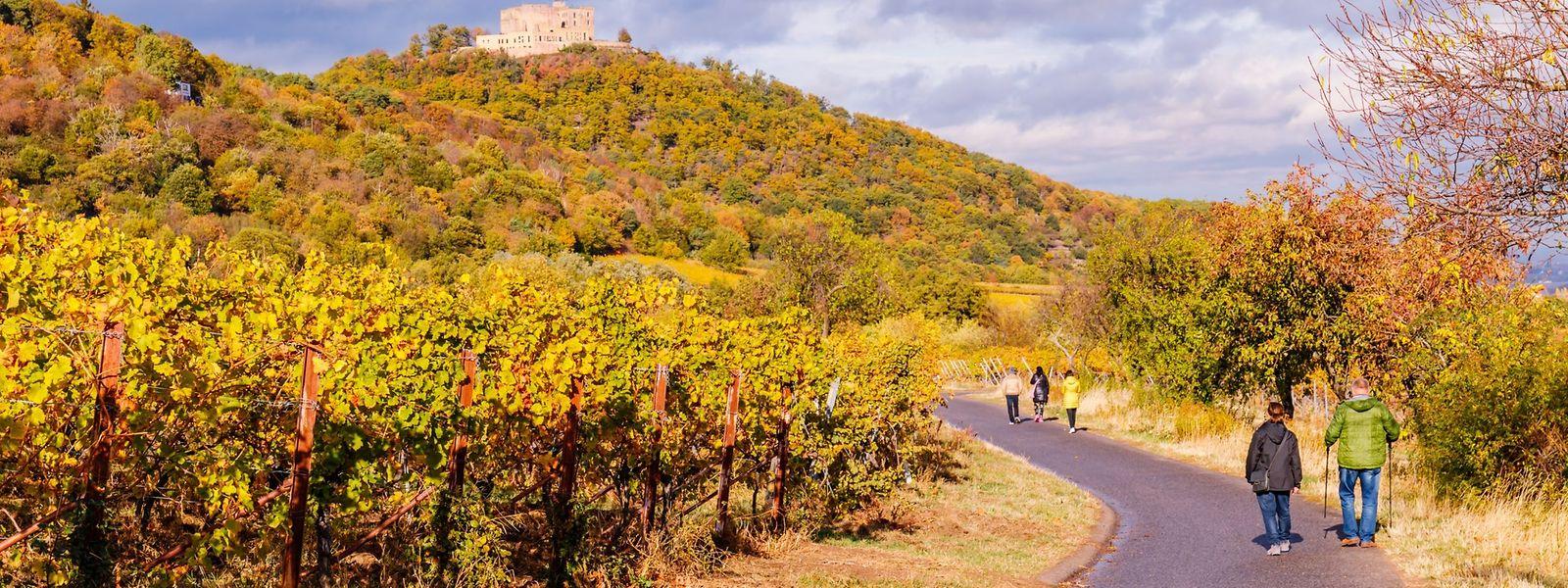 Herbstliche Stimmung rund um das Hambacher Schloss.