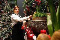 Floristin Stéphanie Daco bereitet sich auf das Advents- und Weihnachtsgeschäft vor.