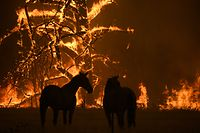 """21.12.2019, Australien, Gospers Mountain: Zwei Pferde stehen auf ihrer Koppel, die vom «Gosper Mountain»-Feuer bedroht ist. Die Lage im Kampf gegen die Buschfeuer in Australien spitzt sich zu. (zu dpa-Korr """"Koalas im Rauch - Australiens Tierwelt leidet unter den Bränden"""") Foto: Dan Himbrechts/AAP/dpa +++ dpa-Bildfunk +++"""
