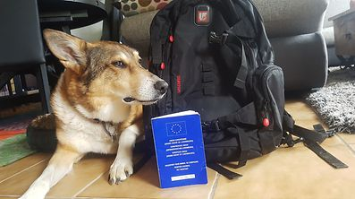 Will Dolly with her EU Pet Passport be able to enter the UK after a Brexit?