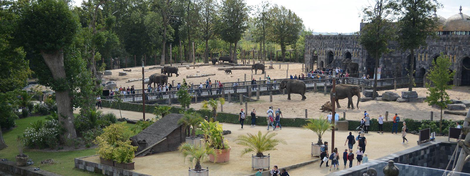 Die Elefantenherde im Pairi-Daiza-Park zählt 22 Tiere.