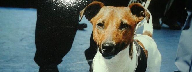 """""""Pocho"""" ist der unbestrittene Star der Hundeabteilung der neapolitanischen Polizei."""
