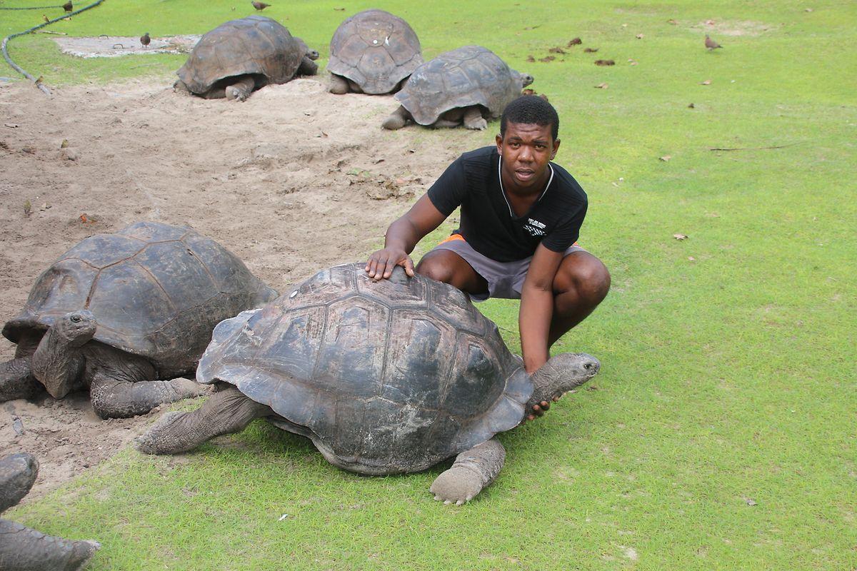 Friedvolle Bewohner auf Curieuse: Ranger Joel Louise und eine der eindrucksvollen Riesenschildkröten.