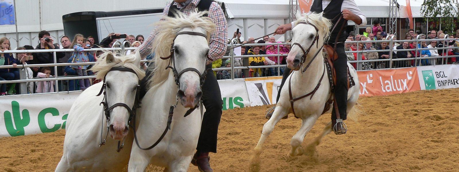 """Die Show-Acts der weißen Camargue-Pferde gehörten zu den Highlights der diesjährigen """"Foire agricole""""."""
