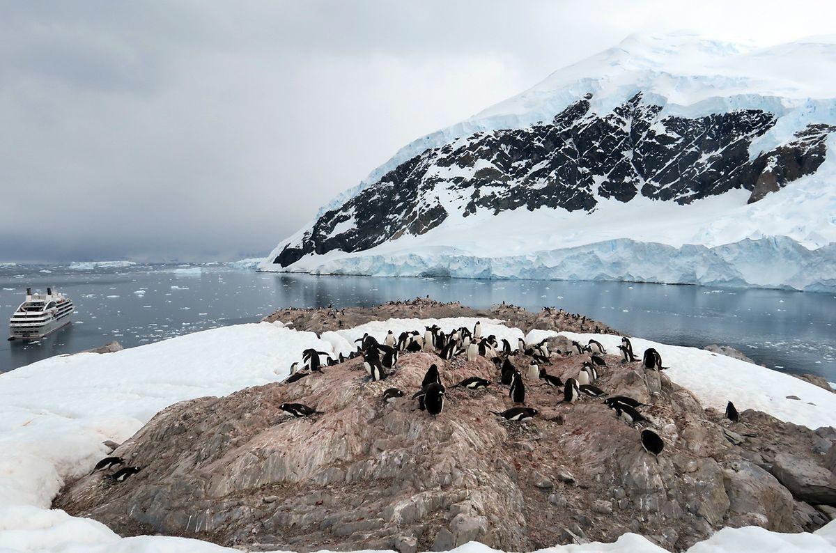 Rund 1000 Pinguin-Brutpaare leben in Neko Harbour. Die Passagiere kommen ihnen recht nahe.