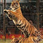 Parlamento português aprovou o fim dos animais no circo
