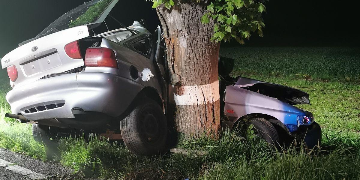 Les chocs avec les arbres constituent l'une des principales causes de décès sur la route.