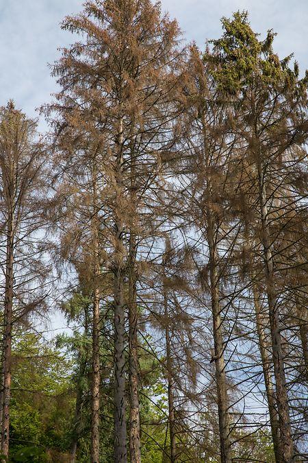 Depuis le printemps, les propriétaires privés touchent 10.000 euros par hectare pour repeupler leurs parcelles de forêt avec des feuillus.