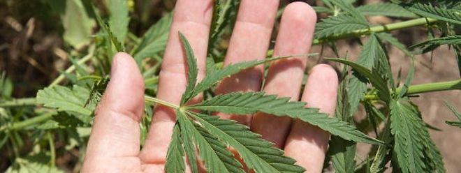 Kampagne soll Jugendliche und Eltern über die Gefahren des Cannabis-Konsums aufklären.