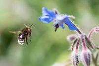 Au Luxembourg, environ 10% des espèces d'insectes sont menacées d'extinction, et entre 30 et 40% sont en déclin
