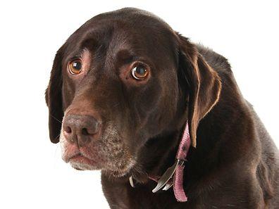 Nierenprobleme, Diabetis, Zahnwurzelerkrankung: Wenn Hunde stinken, kann das unterschiedliche Ursachen haben.