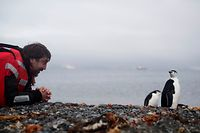 """Auf Tuchfühlung mit einem Zügelpinguin: Schauspieler Javier Bardem startete mit Greenpeace von King George Island aus zu seiner Abenteuerreise mit dem Schiff """"Arctic Sunrise""""."""