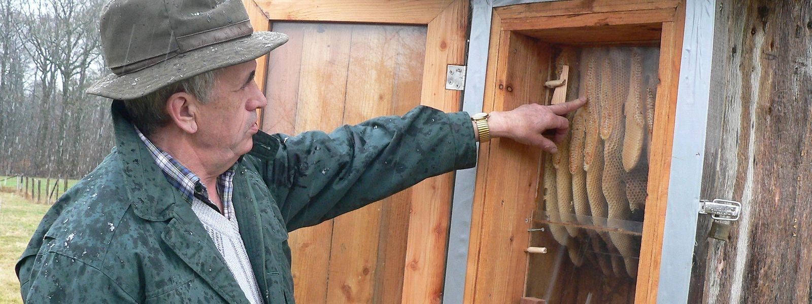 Mich Collette zeigt die nun leeren und zerstörten Naturwaben des Mertziger Bienenhotels.