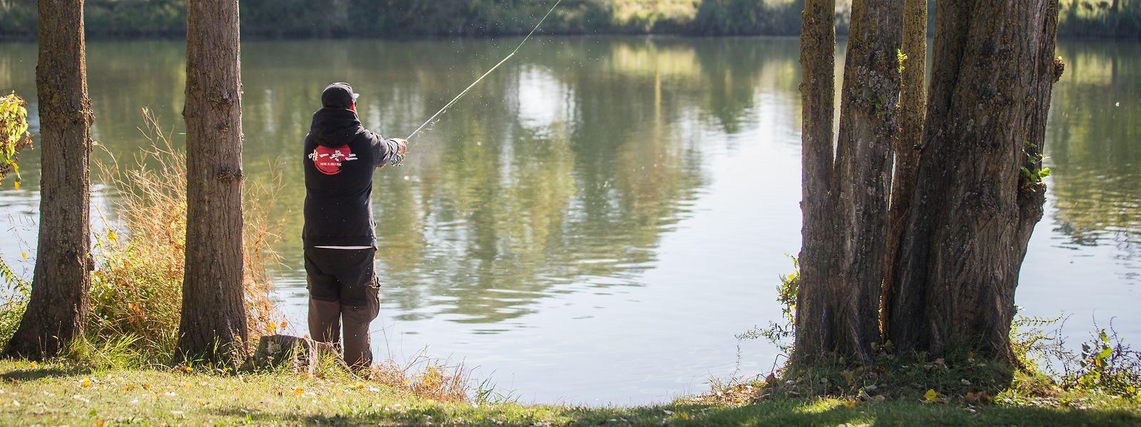 Wenn Angler an der Mosel ihre Haken auswerfen, ist die Wahrscheinlichkeit groß, dass sie eine Grundel fangen. Die Präsenz dieser Fische hat dort in den vergangenen Jahren stark zugenommen.