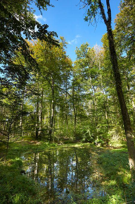 Le Centre nature et forêt Ellergronn à Esch-sur-Alzette fait partie du réseau de l'Etat de la nature