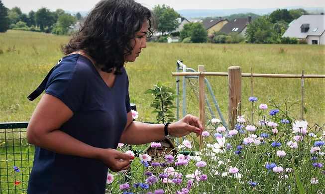 Dianne Powell managed to squeeze a wildflower garden into her garden of eight square metres, along with several other elements