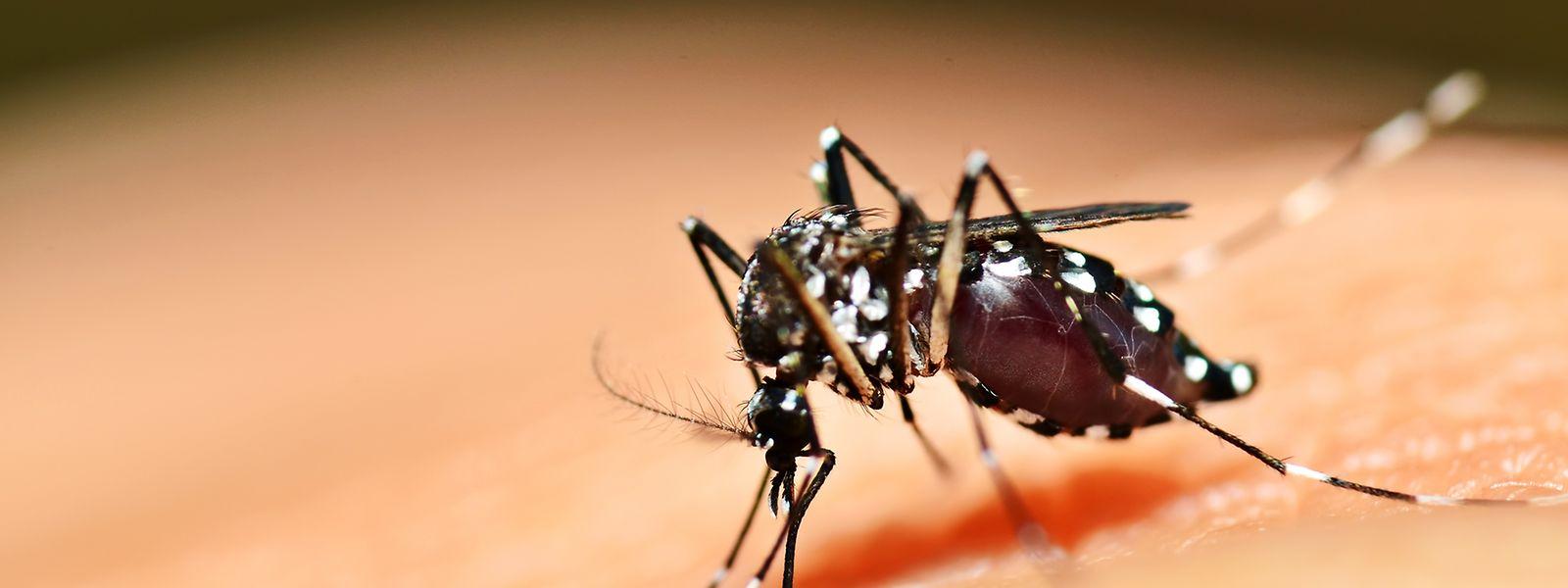 C'est la première fois que ce virus touche un habitant luxembourgeois.