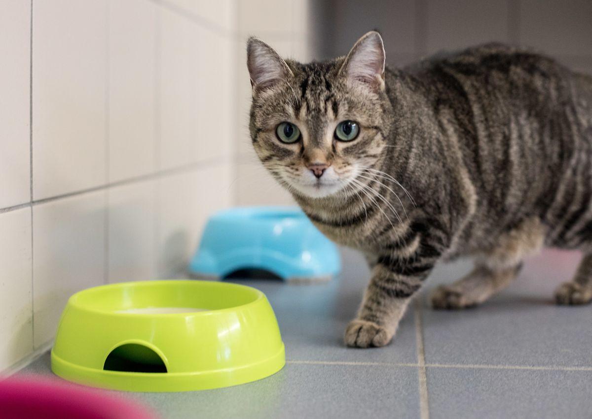 Le coût des soins vétérinaires est dans le viseur de cette nouvelle pétition.
