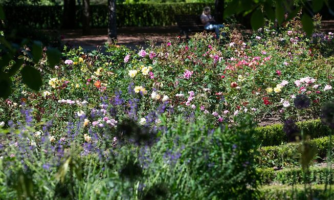 Galgebierg garden in Esch-sur-Alzette