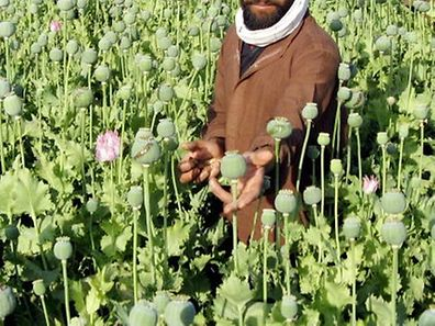 (FILES) This file picture taken on April 17, 2007 shows Afghan villagers tending to opium poppies in the Nad-e Ali district of Helmand province, in southern Afghanistan. Opium production in Afghanistan, the world's largest producer, will continue to fall this year thanks to poor weather, the UN office on drugs and crime predicted on February 10, 2010.      AFP PHOTO / FILES