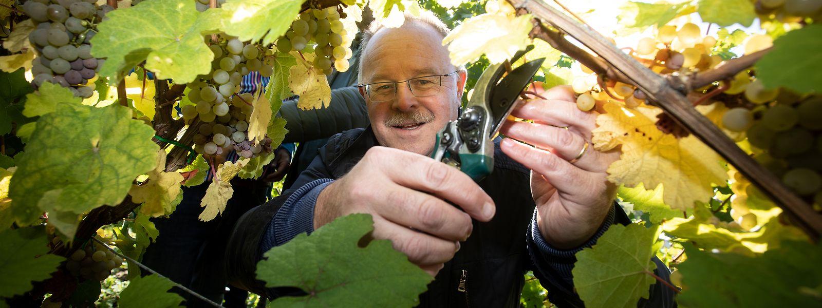Romain Schneider ne cache pas ses inquiétudes pour la filière viticole pénalisée par la fermeture des cafés-restaurants.