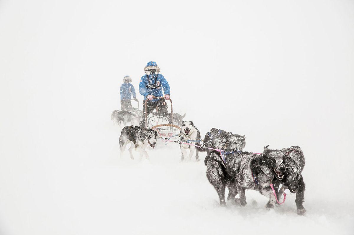 A corrida tem uma extensão de 300 km na Lapónia.