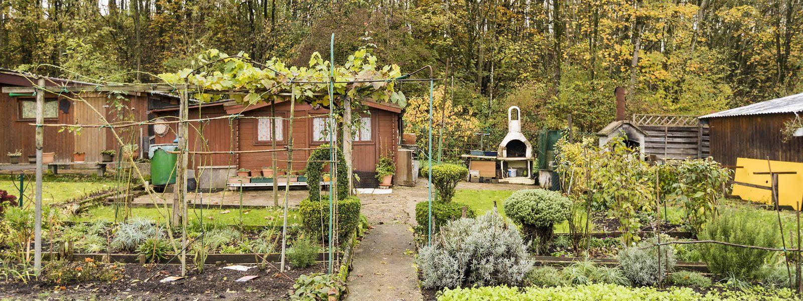 In ihren Parzellen in Cessingen in der Rue du Stade haben die meisten der rund 40 Mieter bereits Ordnung in ihren Garten gebracht. Manches Gemüse kann aber auch jetzt noch geerntet werden.