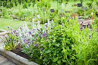 Viele Kräuter lassen sich ganz leicht auch im heimischen Garten anbauen.