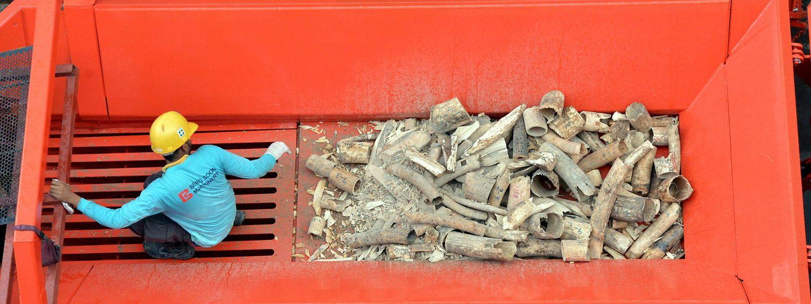 Immer mehr Länder haben in den letzten Jahren den Handel mit Elfenbein verboten.