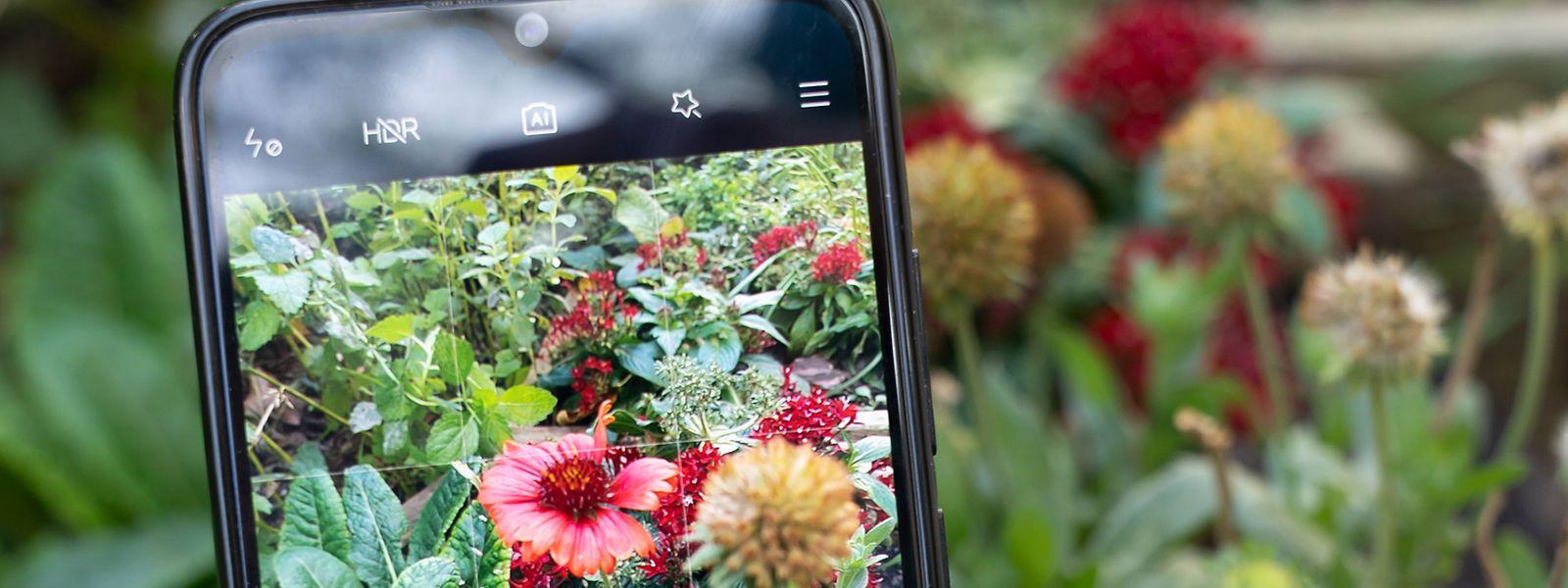 Erkennungs-Apps im Stile von Flora Incognita nutzen die Smartphone-Kamera, um Pflanzen mit einer Datenbank abzugleichen.