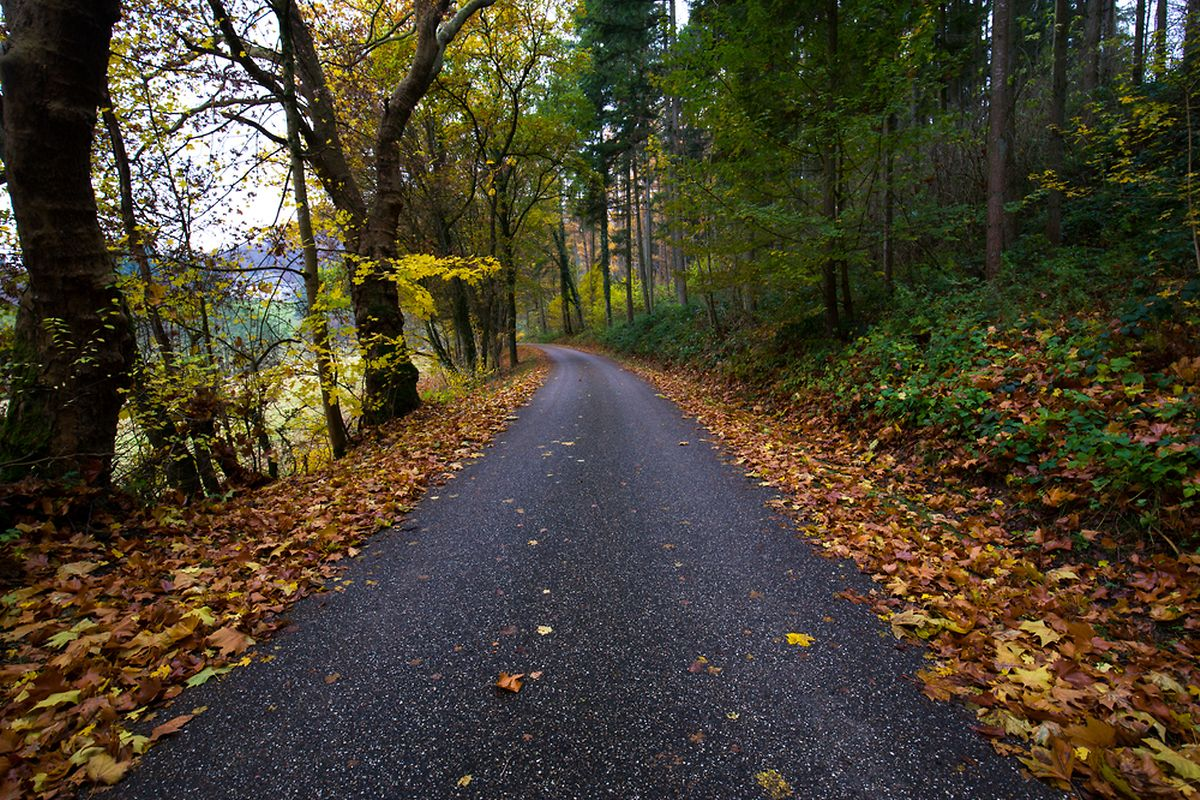 A forest route in Mullerthal, Luxembourg Photo: Shutterstock
