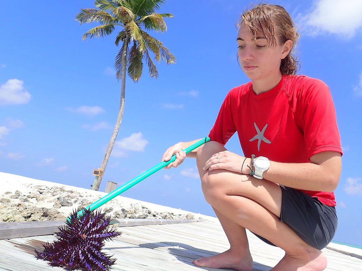 Meeresbiologin Emma Bell präsentiert einen Dornenkronen-Seestern.